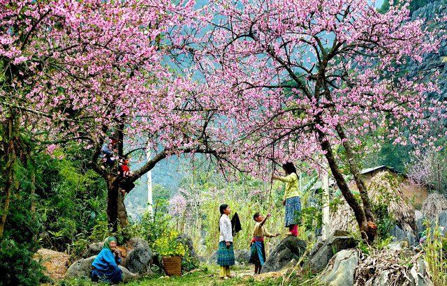 bieu cam ve mua xuan tren que huong em - Biểu cảm về mùa xuân trên quê hương em