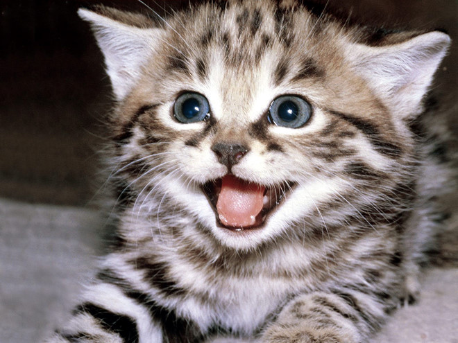 ta con meo lop 4 hay nhat - Tả con mèo lớp 4 hay nhất