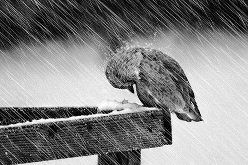 nhung bai tho tinh buon mua dong hay nhat 4 - Những bài thơ tình buồn mùa đông hay nhất