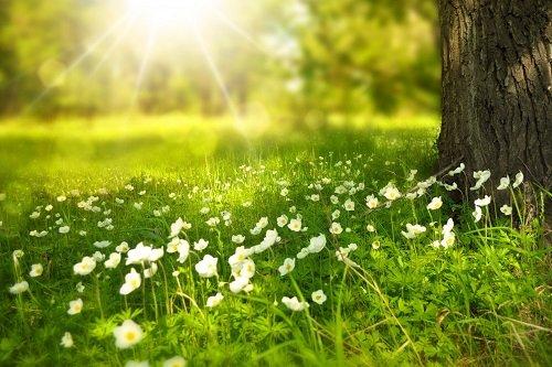 nhung bai tho tinh mua ha hay duoc yeu thich nhat 1 - Những bài thơ tình mùa hạ hay được yêu thích nhất