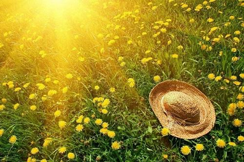 nhung bai tho tinh mua ha hay duoc yeu thich nhat - Những bài thơ tình mùa hạ hay được yêu thích nhất