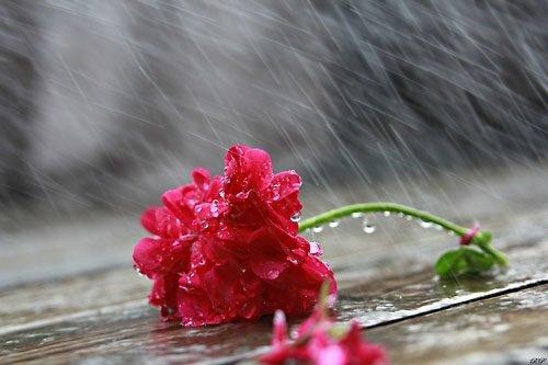 nhung bai tho ve mua hay duoc yeu thich nhat 3 - Những bài thơ về mưa hay được yêu thích nhất