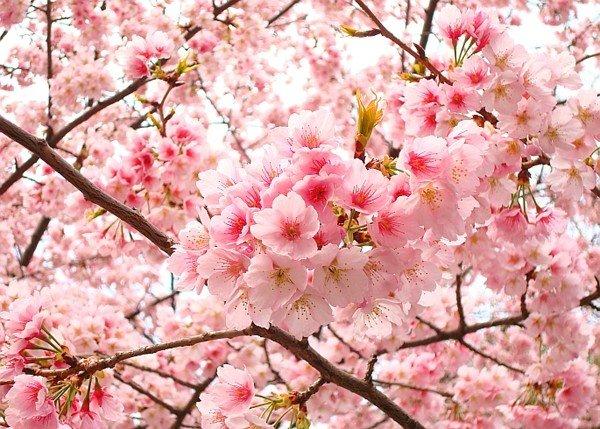 tong hop 20 bai tho ve cac loai hoa hay nhat 1 - Tổng hợp 20 bài thơ về các loài hoa hay nhất