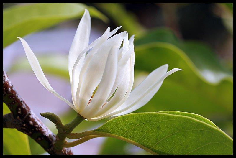 tong hop 20 bai tho ve cac loai hoa hay nhat 2 - Tổng hợp 20 bài thơ về các loài hoa hay nhất