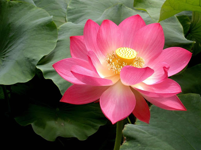 tong hop 20 bai tho ve cac loai hoa hay nhat 3 - Tổng hợp 20 bài thơ về các loài hoa hay nhất