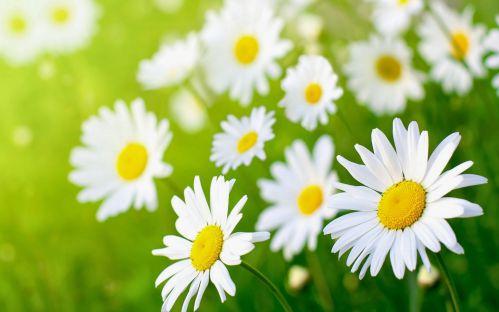 tong hop 20 bai tho ve cac loai hoa hay nhat 5 - Tổng hợp 20 bài thơ về các loài hoa hay nhất
