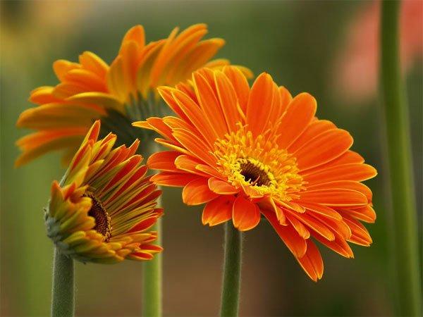 tong hop 20 bai tho ve cac loai hoa hay nhat 6 - Tổng hợp 20 bài thơ về các loài hoa hay nhất