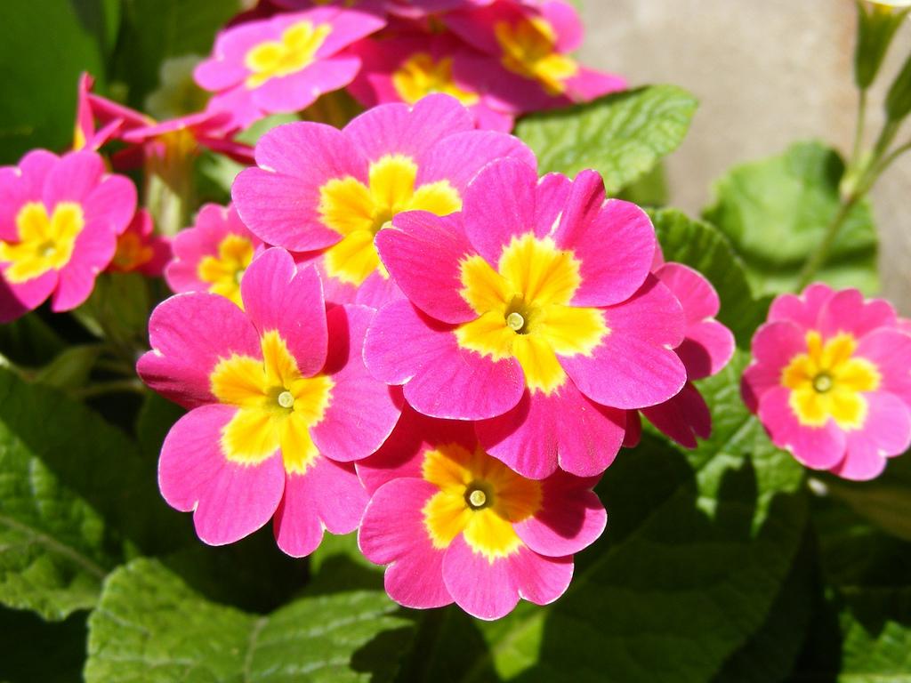 tong hop 20 bai tho ve cac loai hoa hay nhat - Tổng hợp 20 bài thơ về các loài hoa hay nhất