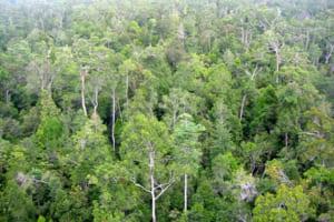 phan tich hinh tuong rung xa nu qua 2 chi tiet - Phân tích hình tượng rừng xà nu qua 2 chi tiết